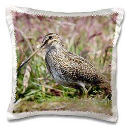 Danita Delimont - Birds - South American snipe or Magellan s