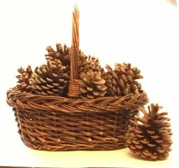 "LOT OF 13 Pine Cones 3-5"" TALL *With Basket* HOLIDAY CRAFTS"