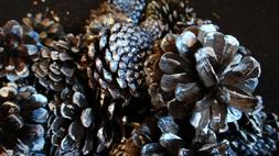 Pine cones dyed black accented with silver. Hand painted Pin